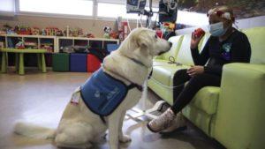 """Perros que """"acortan las hora"""" en las unidades de oncología infantil."""