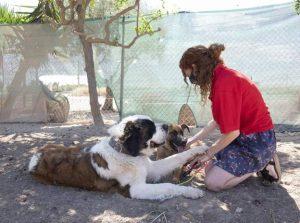 violencia de género animales